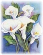 lillies2a